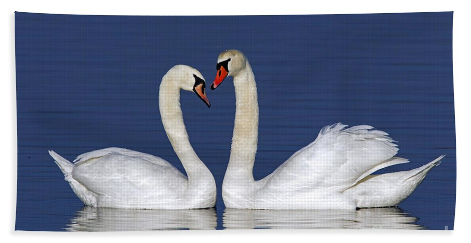 Mute Swan Bath Sheet featuring the photograph 110307p053 by Arterra Picture Library