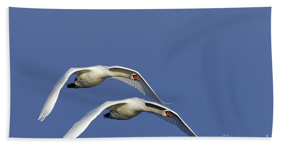 Mute Swan Bath Sheet featuring the photograph 110506p087 by Arterra Picture Library