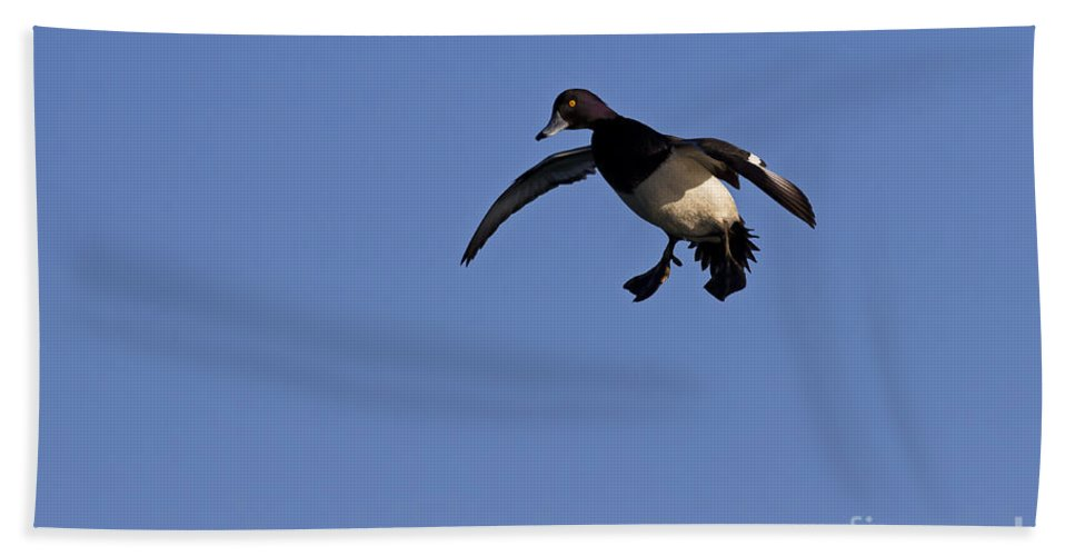 Tufted Duck Bath Sheet featuring the photograph 110613p205 by Arterra Picture Library