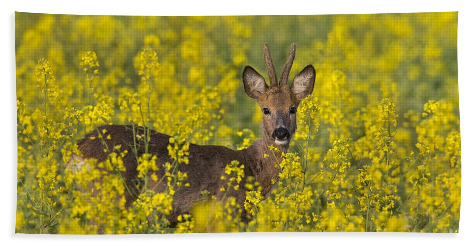 Roe Deer Bath Sheet featuring the photograph 110714p138 by Arterra Picture Library