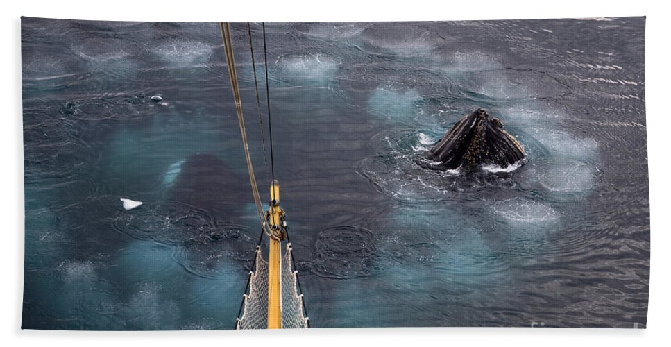 Humpback Whale Hand Towel featuring the photograph 111130p125 by Arterra Picture Library