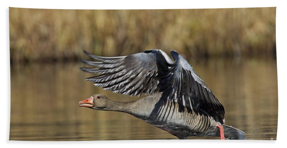 Greylag Goose Bath Sheet featuring the photograph 111216p036 by Arterra Picture Library