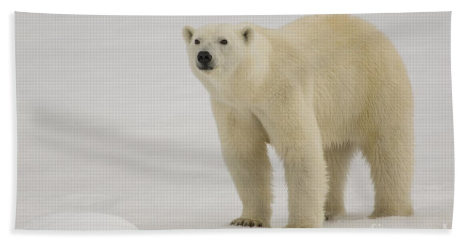 Polar Bear Cub Bath Sheet featuring the photograph Polar Bear Walking On Ice by John Shaw