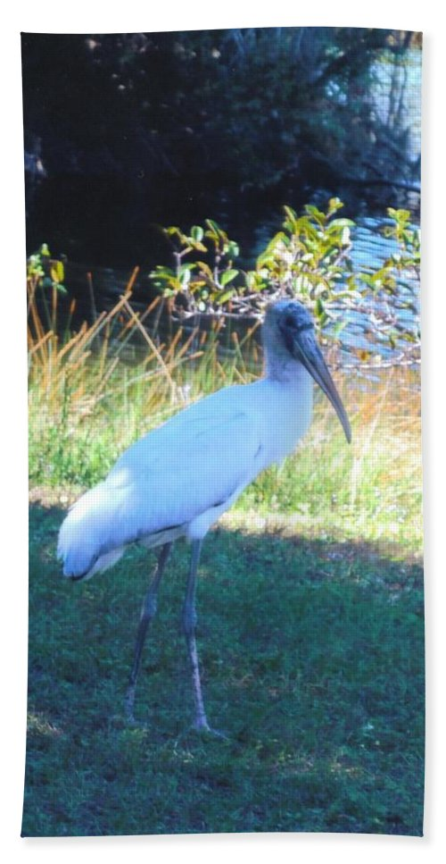 Lakes Park In Ft.myers Bath Sheet featuring the photograph Wood Stork by Robert Floyd