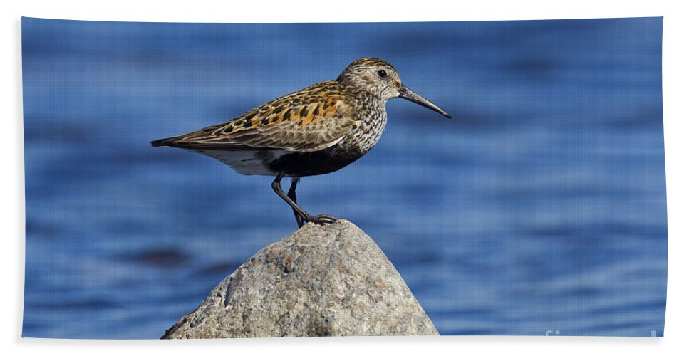 Calidris Alpina Hand Towel featuring the photograph 121213p018 by Arterra Picture Library