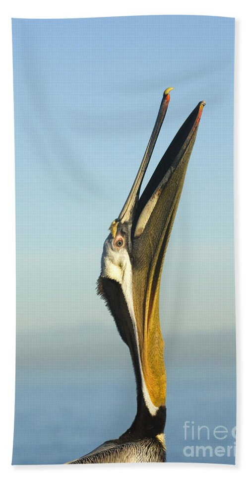 Brown Pelican Hand Towel featuring the photograph Brown Pelican by John Shaw