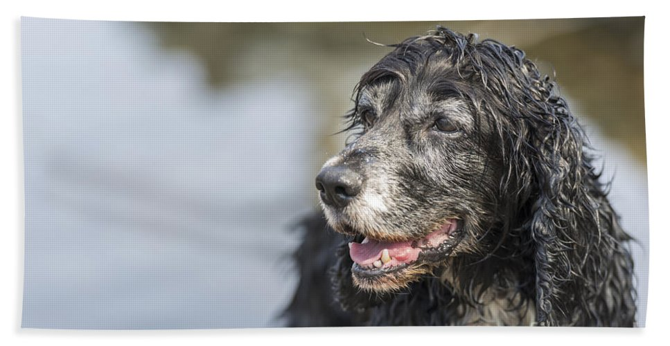 Dog Bath Sheet featuring the photograph Dog by Mats Silvan