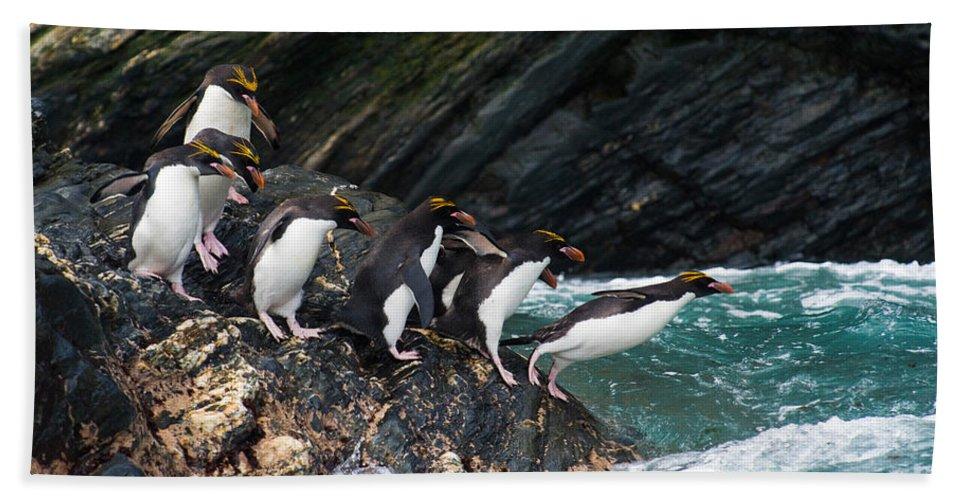 Animal Bath Sheet featuring the photograph Macaroni Penguin by John Shaw