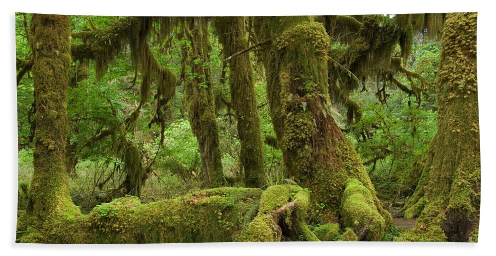 Moss-covered Hand Towel featuring the photograph Olympic National Park by John Shaw