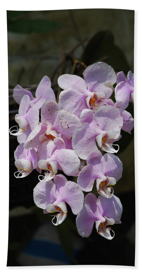 Butterfly Hand Towel featuring the photograph Orchid by Robert Floyd