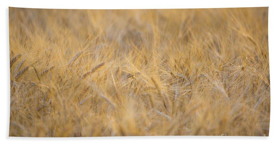 Wheat Bath Sheet featuring the photograph Wheat by Mats Silvan