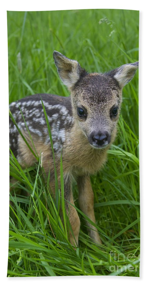 Roe Deer Hand Towel featuring the photograph 131018p160 by Arterra Picture Library
