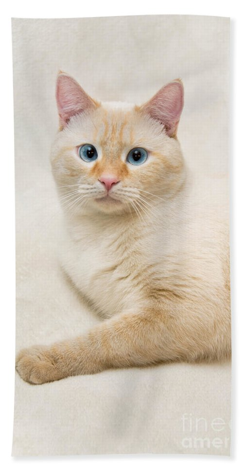 Blue Eyes Hand Towel featuring the photograph Flame Point Siamese Cat by Amy Cicconi