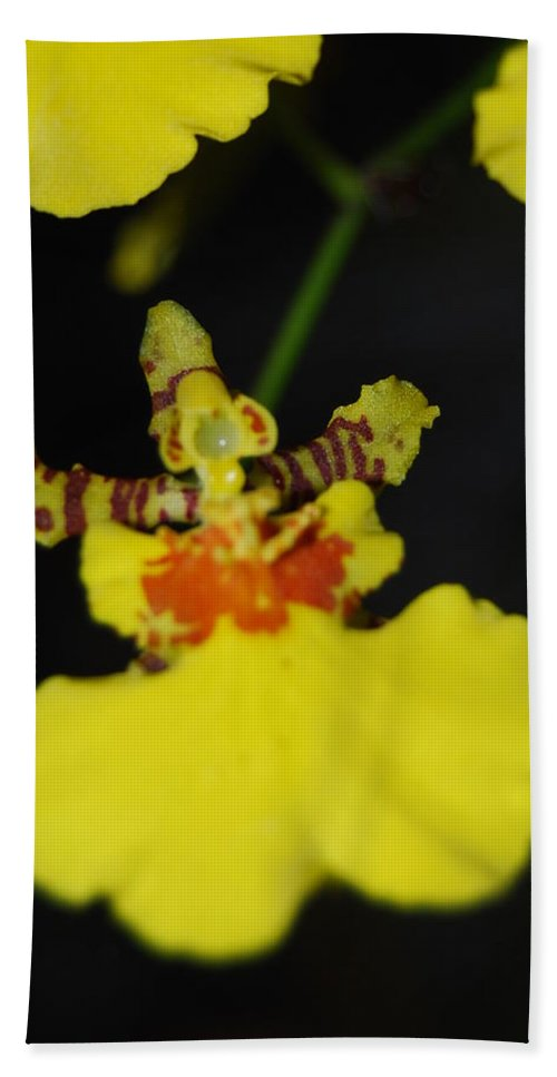 Dancing Lady Hand Towel featuring the photograph Orchid by Robert Floyd