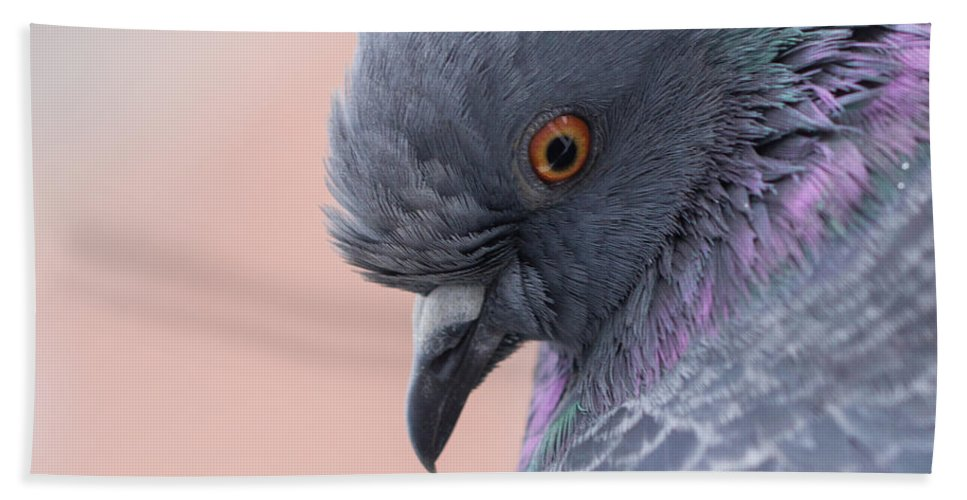 Birds Hand Towel featuring the photograph Rock Dove by Jivko Nakev