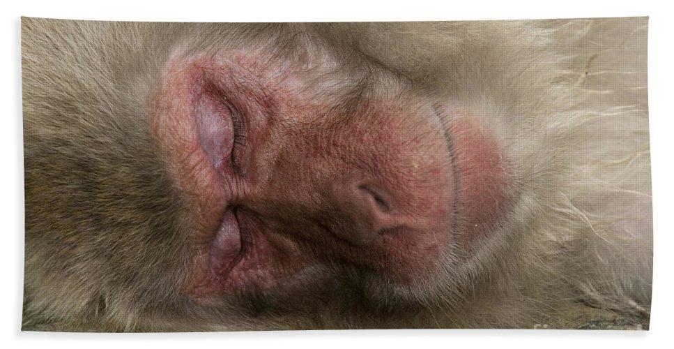 Asia Bath Sheet featuring the photograph Snow Monkey, Japan by John Shaw