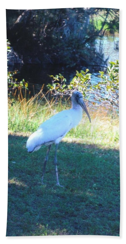 Lakes Park Bath Sheet featuring the photograph Wood Stork by Robert Floyd