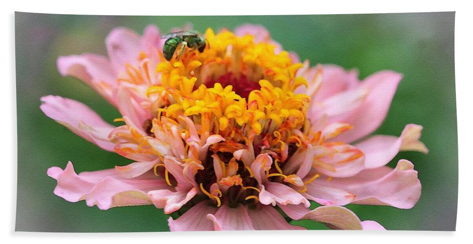 Mccombie Bath Sheet featuring the painting Zinnia From The Candy Mix by J McCombie