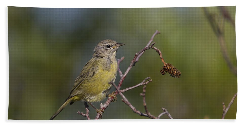 Doug Lloyd Hand Towel featuring the photograph Orangecrowned Warbler by Doug Lloyd