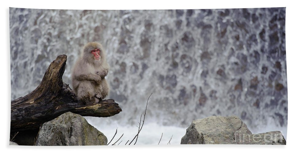 Japanese Macaque Bath Sheet featuring the photograph Snow Monkeys by John Shaw