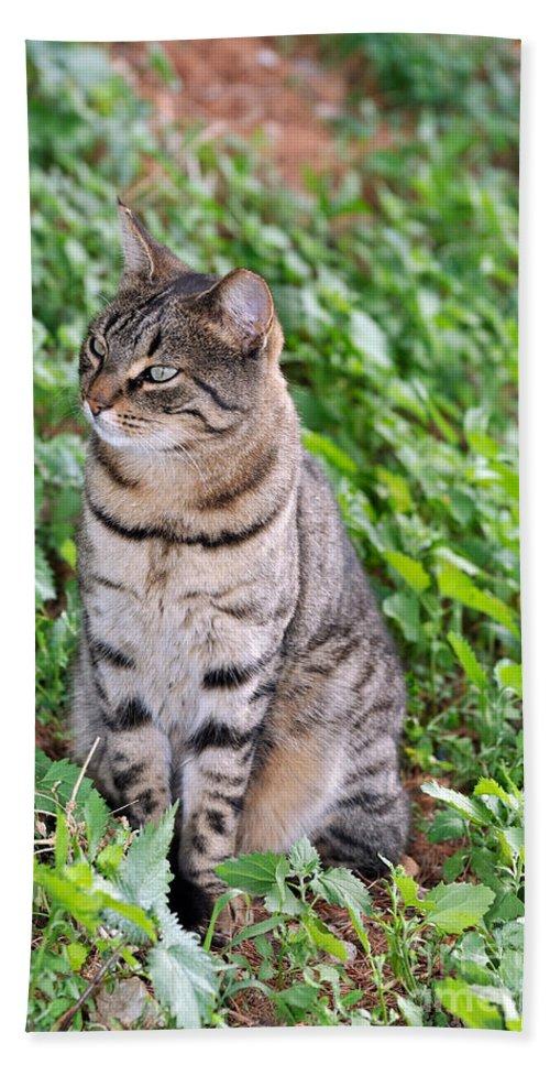 Cat Bath Sheet featuring the photograph Cat In Hydra Island by George Atsametakis