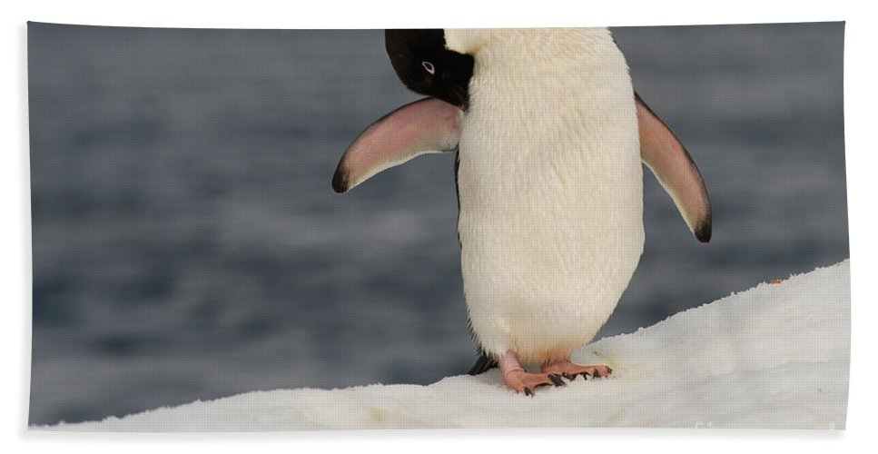 Iceberg Bath Sheet featuring the photograph Adelie Penguin by John Shaw
