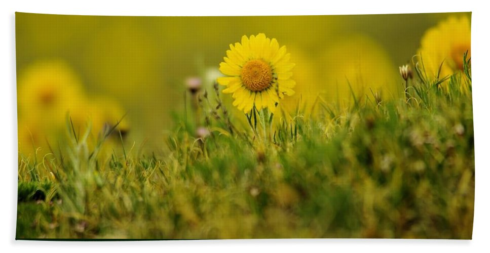 Flowers Hand Towel featuring the photograph Alpine Flowers by Jeff Swan