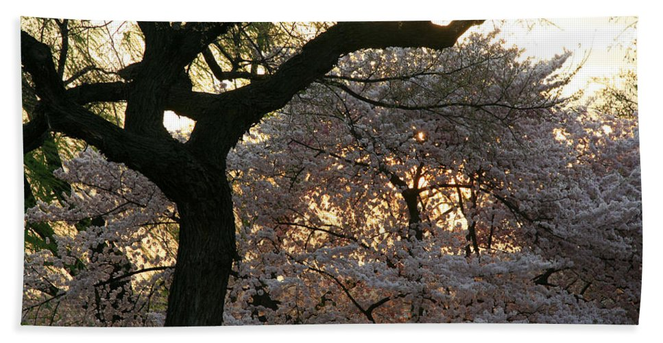 Trees Hand Towel featuring the photograph Angry Trees At Sunset by Cora Wandel