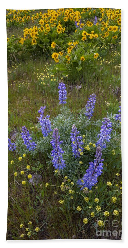 America Hand Towel featuring the photograph Arrowleaf Balsamroot And Lupine by John Shaw