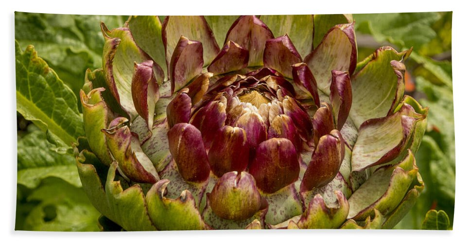 Horticulture Hand Towel featuring the photograph Artichoke by Bailey Cooper