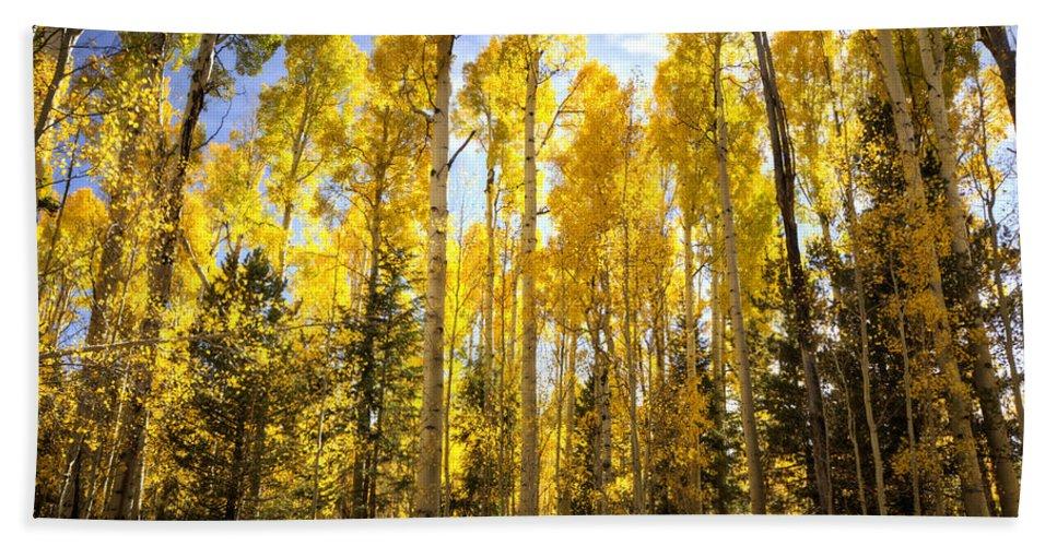 Autumn Bath Towel featuring the photograph Autumn Gold by Saija Lehtonen