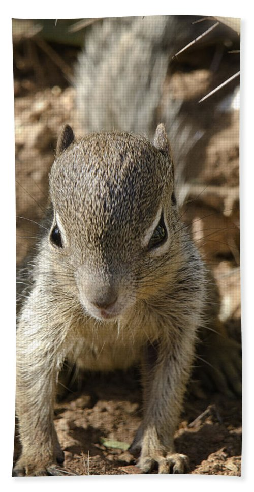 Rock Squirrel Bath Towel featuring the photograph Baby Rock Squirrel by Saija Lehtonen