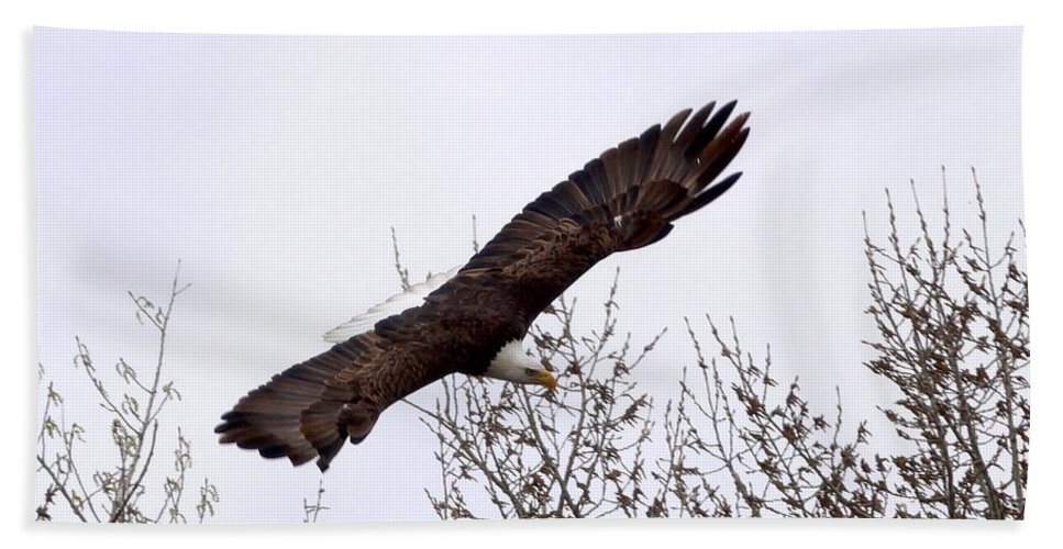 Eagle Hand Towel featuring the photograph Bald Eagle Soaring by Lori Tordsen