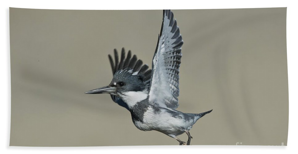 Belted Kingfisher Hand Towel featuring the photograph Belted Kingfisher by Anthony Mercieca
