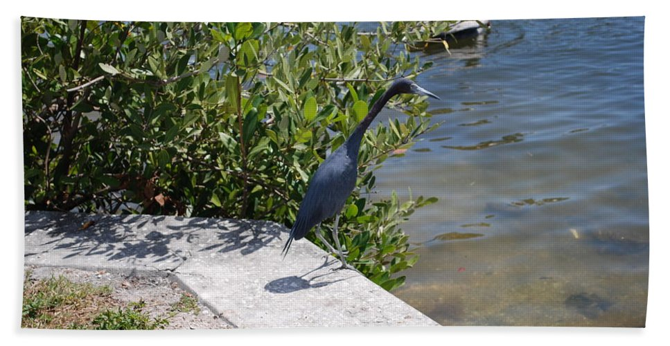 Hunting Food Hand Towel featuring the photograph Blue Heron by Robert Floyd