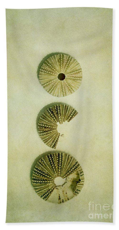 Sea Urchin Hand Towel featuring the photograph Broken by Margie Hurwich