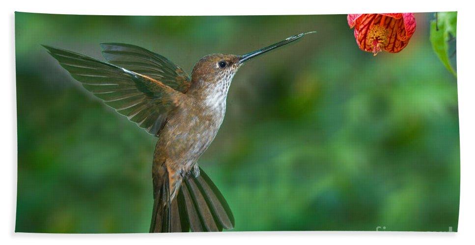 Animal Hand Towel featuring the photograph Bronzy Inca Hummingbird by Anthony Mercieca