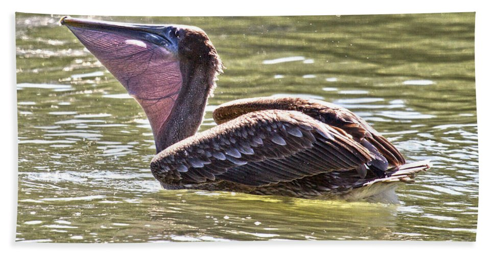 Brown Bath Sheet featuring the photograph Brown Pelican by Betsy Knapp