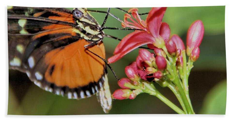 Butterfly Hand Towel featuring the photograph Butterfly by Dan Sproul