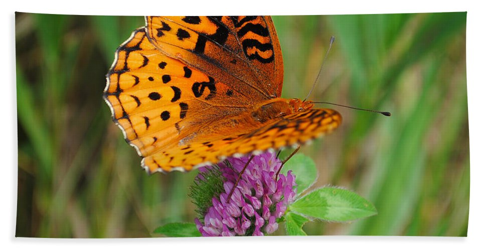 Butterfly Hand Towel featuring the photograph Butterfly by David Hart