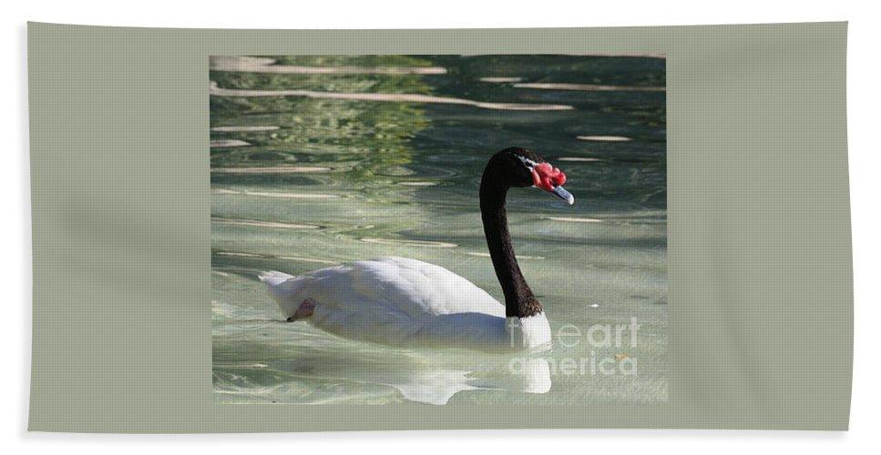 Canadian Swan Bath Sheet featuring the photograph Canadian Swan by John Telfer