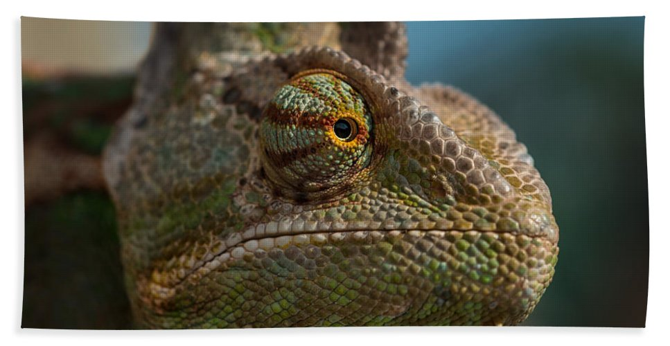 Animal Hand Towel featuring the photograph Chameleon by TouTouke A Y