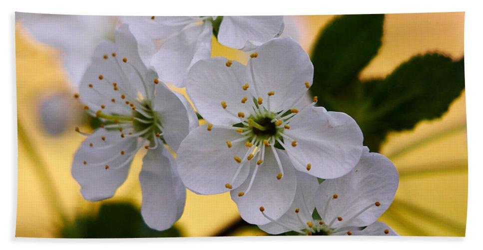 Lehto Hand Towel featuring the photograph Cherry Flowers by Jouko Lehto