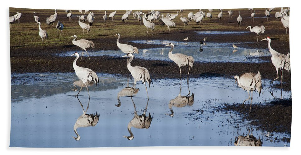 Migratory Hand Towel featuring the photograph Common Crane Grus Grus by Eyal Bartov
