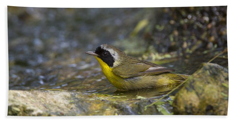 Doug Lloyd Hand Towel featuring the photograph Common Yellowthroat by Doug Lloyd