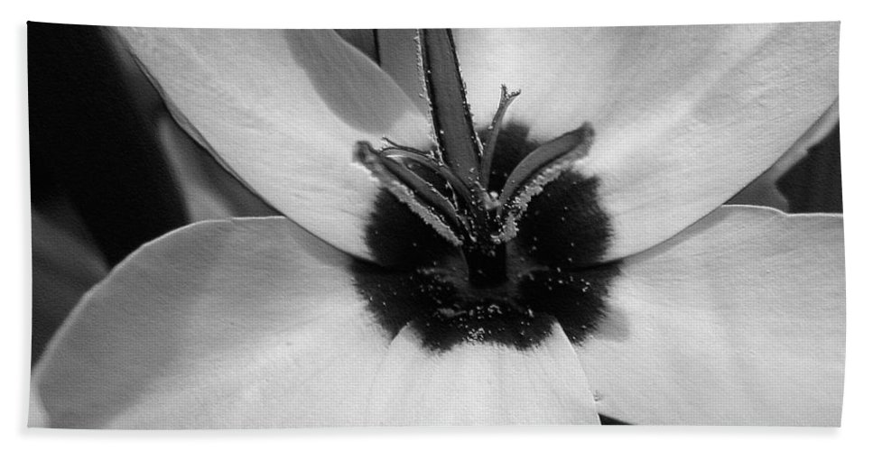 Ixia Bath Sheet featuring the photograph Corn Lily Named Giant by J McCombie