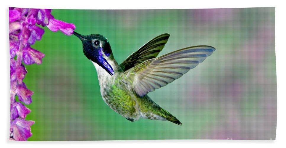 Animal Hand Towel featuring the photograph Costas Hummingbird by Anthony Mercieca