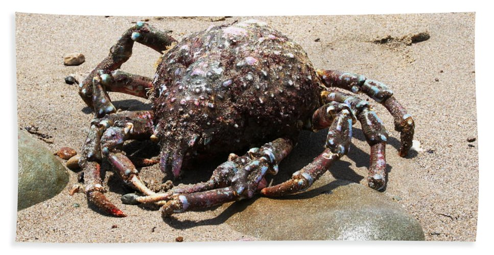 Spider Hand Towel featuring the photograph Crab Beach by Henrik Lehnerer