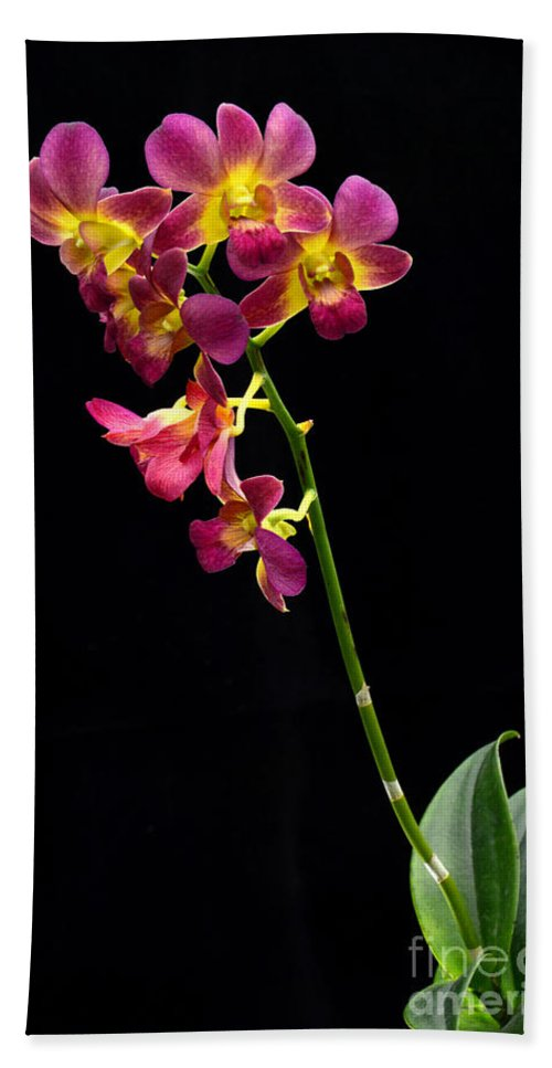 White Bath Sheet featuring the photograph Dendrobium Orchid by Antoni Halim