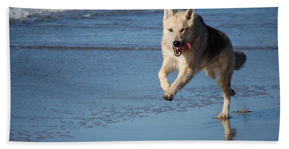 Dog Hand Towel featuring the photograph Dog On Beach by FL collection